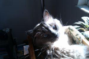 Cat number four