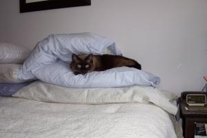 Fav cat